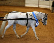 #268  All Patent Show Harness
