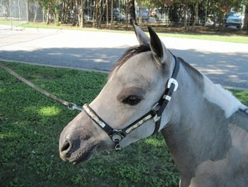 #402   Performance/stock Show Halters-Silver