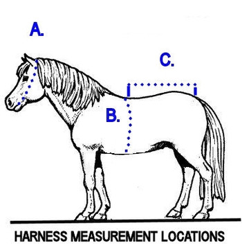 Measuring For a Harness