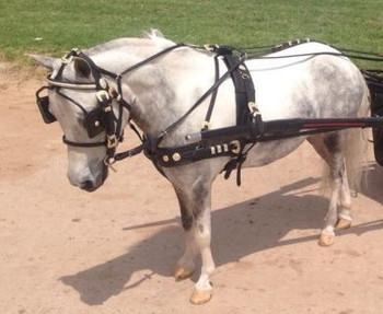 #272  Western Country Show Harness