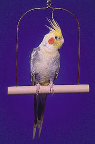 Penn Plax Cockatiel Bird Swing