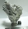 Holey Stone, Large Fossiliferous Stone with Many Holes