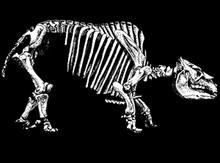 Toxodon Bones T-Shirt