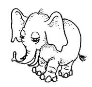 Elephant - 79A02