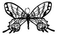 Butterfly - 79A05