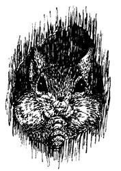 Squirrel - 40A04