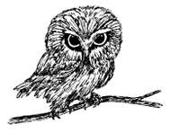 Owl - 30A04