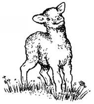 Lamb - 11A10