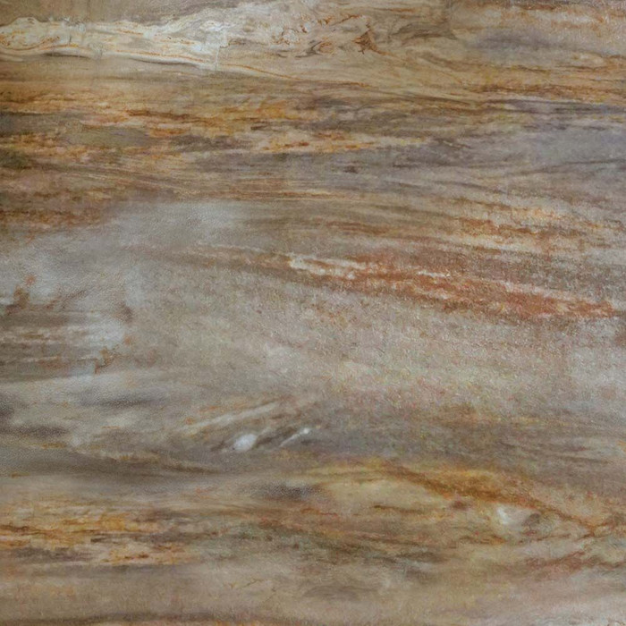 Petrified Wood Closeup