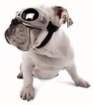 Chrome Originalz Pet Dog Sunglasses by Doggles