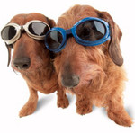 Blue Originalz Pet Dog Sunglasses by Doggles