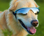 Blue Rubber Framed K9 Optix Pet Dog Sunglasses