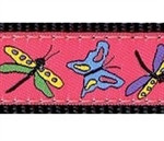 Papillon on Kelly Dog Collars
