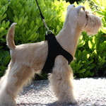 Plain Ultrasuede Pet Dog Step In Harness - Black by Susan Lanci Designs