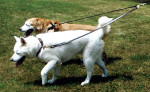 No Tangle Leather Two-Dog Walker Leash