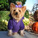 Sport Dog Hoodie Sweatshirt in Purple