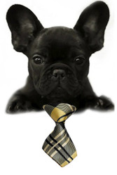 Tan Plaid Small Dog Neck Tie