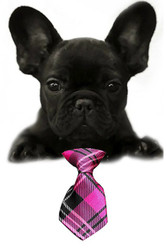 Pink Plaid Small Dog Neck Tie