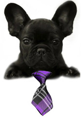 Purple Plaid Small Dog Neck Tie