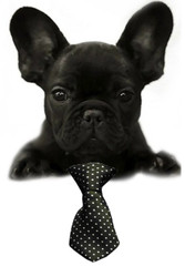 Black Swiss Dot Small Dog Neck Tie