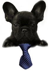 Navy Blue Swiss Dot Small Dog Neck Tie