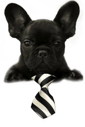 White / Black Large Stripe Small Dog Neck Tie