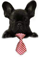 Red Candy Cane Stripe Small Dog Neck Tie