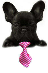 Pink & White Stripe Small Dog Neck Tie