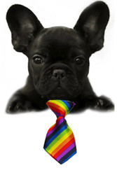 Rainbow Stripe Small Dog Neck Tie