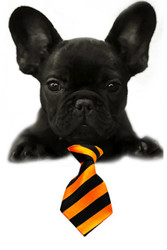 Orange / Black Large Stripe Small Dog Neck Tie