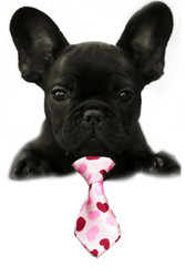 Hearts Small Dog Neck Tie