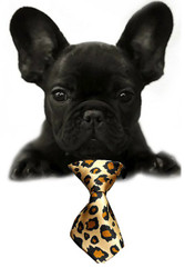 Leopard Small Dog Neck Tie
