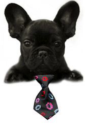 Smooches Small Dog Neck Tie