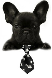 Classic Music Small Dog Neck Tie
