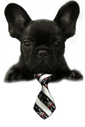 Jolly Rogers Small Dog Neck Tie