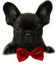 Red Solid Small Dog Bow Tie