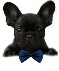 Navy Blue Solid Small Dog Bow Tie