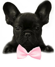 Light Pink Solid Small Dog Bow Tie