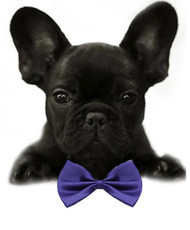 Purple Solid Small Dog Bow Tie