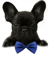 Royal Blue Solid Small Dog Bow Tie