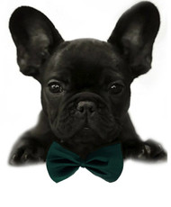 Forest Green Solid Small Dog Bow Tie