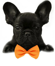 Orange Solid Small Dog Bow Tie