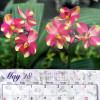 The Akatsuka Original 2018 Calendar