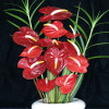 12 Anthurium Stems (Medium Size & Assorted Colors)
