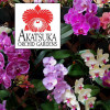 "Any 4"" Pot Phalaenopsis Variety - GROWER'S CHOICE"
