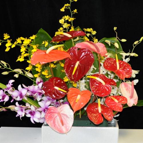 Orchid-Anthurium #2