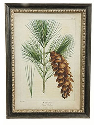 "27"" Framed Pinecone Print 1"
