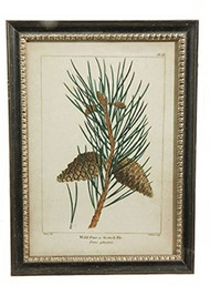 "27"" Framed Pinecone Print"