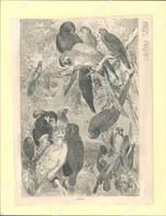 http://images.mmgarchives.com/JP/AA-1853/AKK-861_F.JPG