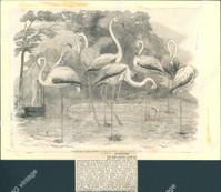 http://images.mmgarchives.com/JP/AA-1853/AKK-836_F.JPG